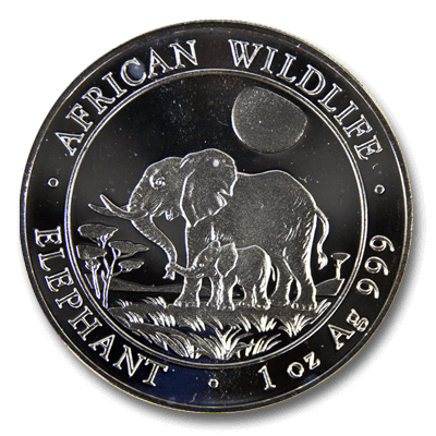 Somali Elephant Front