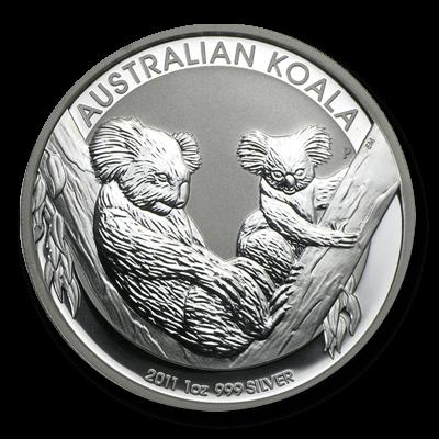 Australian Koala Front